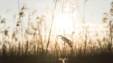 Høstoffer og kollekt