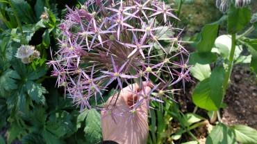 Den sociale blomsterhave